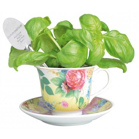 Zestaw do hodowli bazylii w herbacianej filiżance