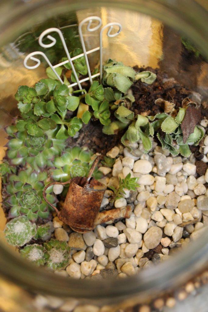 mini ogród w słoiku - zbliżenie