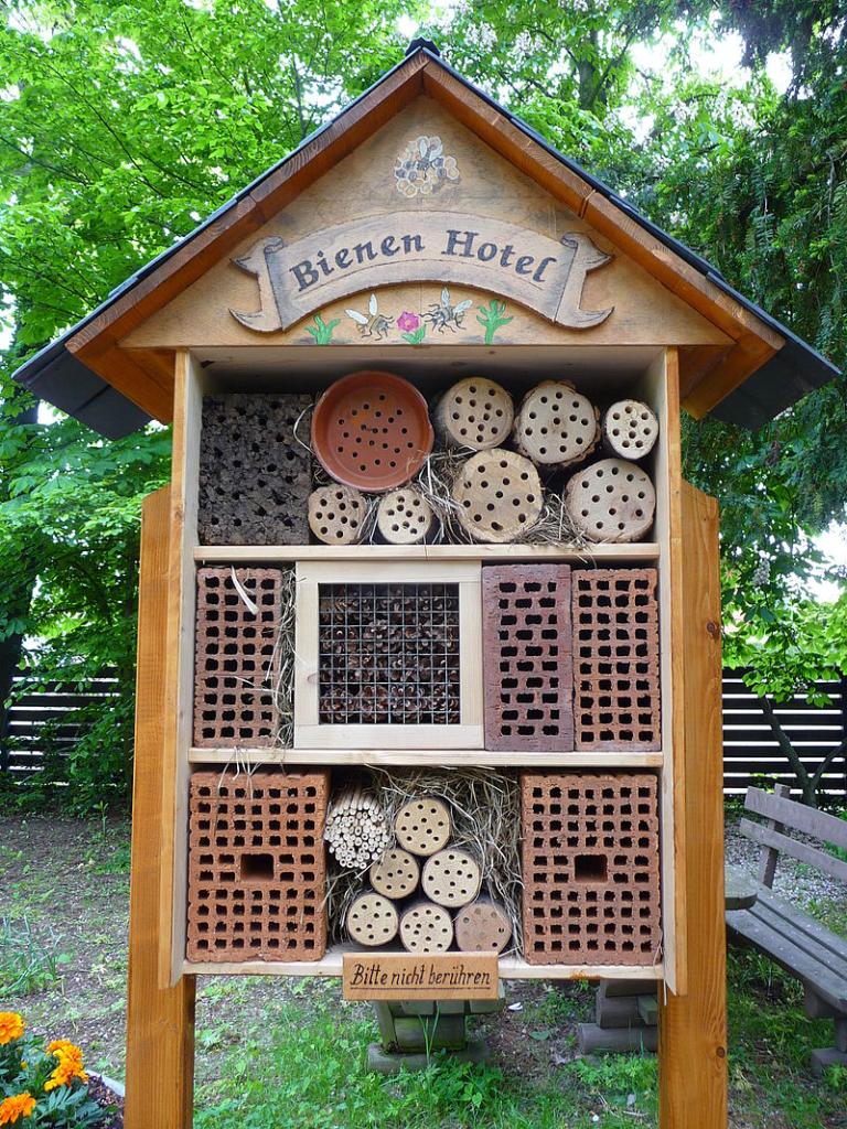Hotel chroniący dzikie pszczoły i inne pożyteczne owady