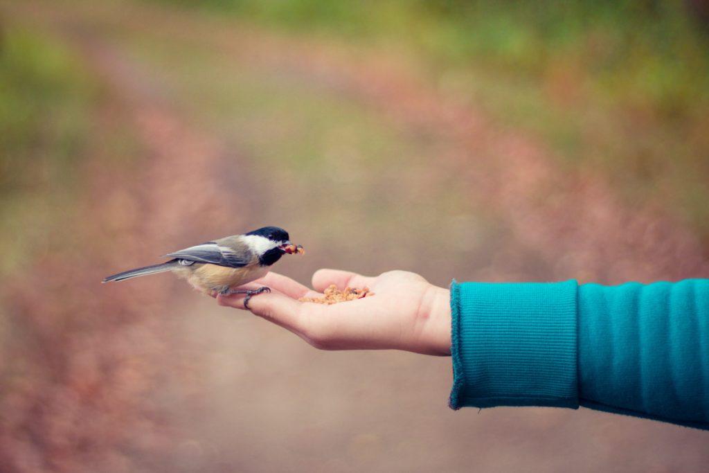 dokarmnianie ptaków