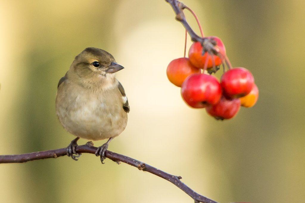 ptak-jesien
